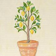 Meyer Lemon Tree Poster
