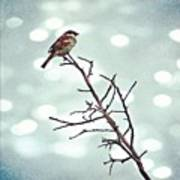 #mgmarts #bird #nature #life #bestpic Poster