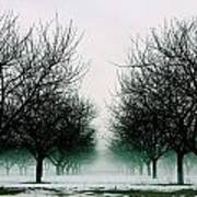 Michigan Cherry Trees In Winter Poster