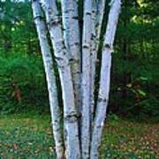 Micro-grove Poster