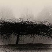 Middlethorpe Tree In Fog Sepia - Award Winning Photograph Poster