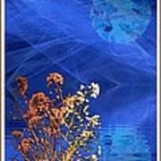 Midnight Flowers Poster