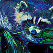 Midnight Racoon Poster