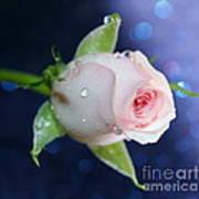 Midnight Rose Poster