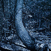 Midnight Woods Poster