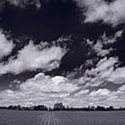Midwest Corn Field Bw Poster by Steve Gadomski