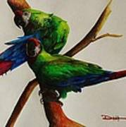 Military Macaws Poster