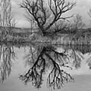 Mill Pond Tree Poster