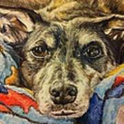 Milo The Lurcher Poster
