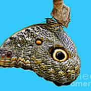 Mindo Butterfly Poster by Al Bourassa