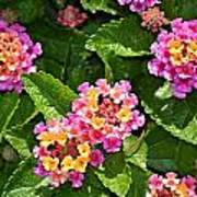 Mini Flowers Poster