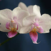 Mini Orchids 2 Poster