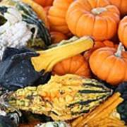 Mini Pumpkins And Gourds Poster