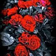 Mini Roses On Walk Poster