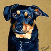 Miniature Pinscher Dog Painting Poster