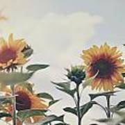 Minimal Sunflowers Against Blue Sky In Autumn Poster