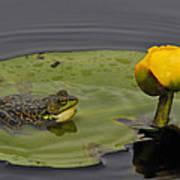 Mink Frog On Lilypad  Poster