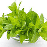 Mint Sprigs In Bowl Poster by Elena Elisseeva