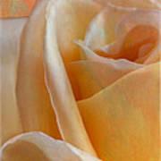 Mirage Rose Poster
