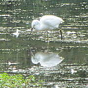 Mirror Image Of The Snowy Egret Poster