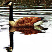 Mirrored Goose Poster