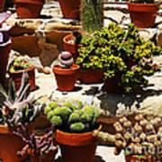 Mission Cactus Garden Poster