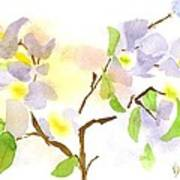 Missouri Dogwood In Watercolor Poster