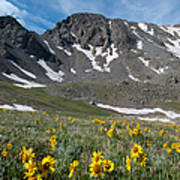 Missouri Mountain And Wildflower Landscape Poster