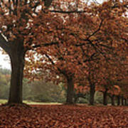 Misty Colours Of Autumn Poster