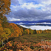 Misty Day In The Cairngorms II Poster