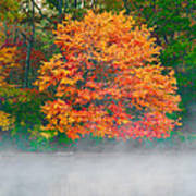 Misty Fall Tree Poster