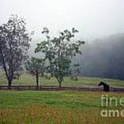 Misty Morning At The Farm Poster