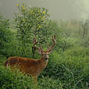 Misty Morning Deer Poster