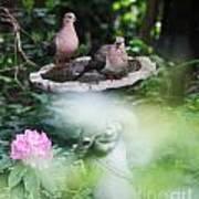 Misty Morning Doves Poster