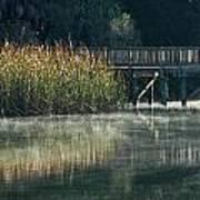 Misty Pond Poster