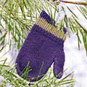 Mitten In Snowy Pine Tree Poster
