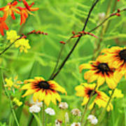 Mixed Flowers Bloom In A Garden Poster