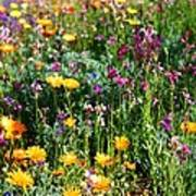 Mixed Wildflowers Poster