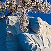 Mlk Memorial Framed By Cherry Blossoms Poster