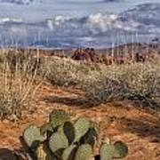 Mojave Desert Cactus Poster