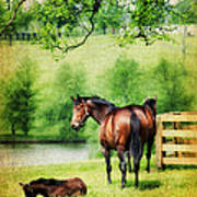 Mom And Foal Poster