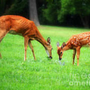 Mom Sharing A Snack With Her Baby Fawn Poster