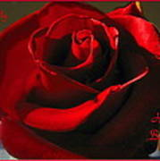 Mom's Red Rose Happy Birthday Wife Poster