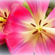Moms Tulips 1 Poster