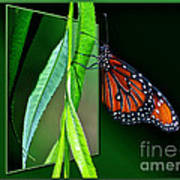Monarch Butterfly 04 Poster