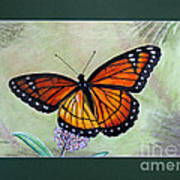 Viceroy Butterfly By George Wood Poster