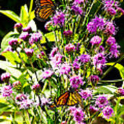 Monarch Butterfly Couple Poster