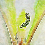 Monarch Caterpillar - Digital Watercolor Poster
