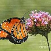 Monarch Flutterby Poster