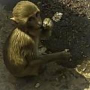 Monkey Poster by Jennifer Burley